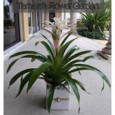 Organically Modern Bromeliad