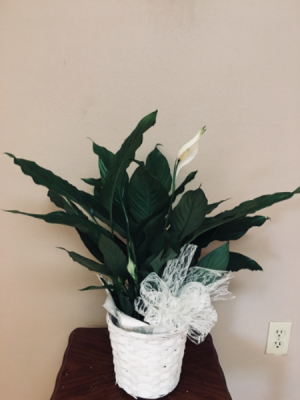Our love and sympathy Plant in Renton, WA | Alicia's Wonderland II