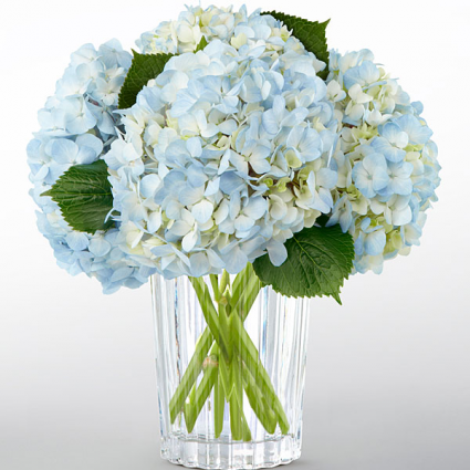 OUR SPECIAL OFFER TODAY BLUE & WHITE HYDRANGEA ONLY $4.00 STEM