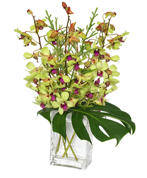 OUT OF THIS WORLD Orchid Arrangement in Solana Beach, CA | DEL MAR FLOWER CO