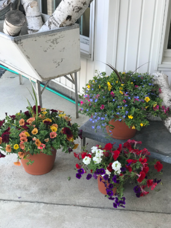 Outdoor Flowering Container