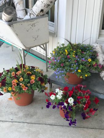 Outdoor Flowering Container