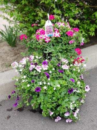 Outdoor Hanging Basket