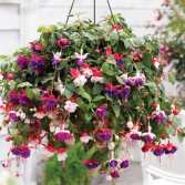 Outdoor hanging basket Hanging basket for shade or sun.