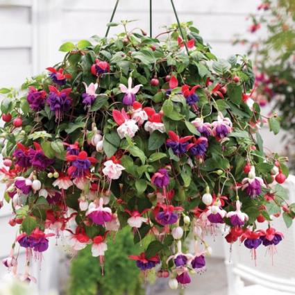 Outdoor hanging basket Hanging basket for shade or sun.
