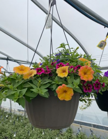 Outdoor hanging basket outdoor