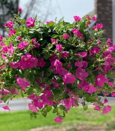 Outdoor Hanging Basket Outdoor Plant