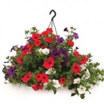 Outdoor Hanging Basket Sunny