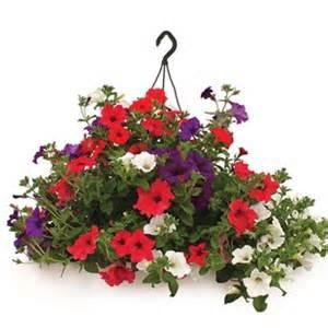 Outdoor Hanging Basket Sunny