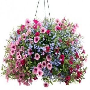 Outdoor Hanging Baskets Mixed- they are all different