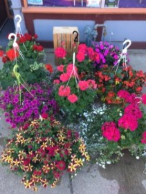 OUTDOOR HANGING BASKETS MOTHER'S DAY