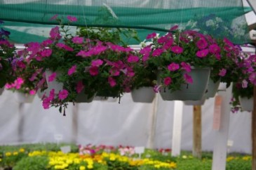 Outdoor hanging baskets Hanging basket