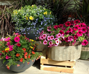 Outdoor Patio Planters Great selection for Mothers Day in Pelican Rapids, MN | Brown Eyed Susans Floral