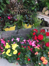 Outdoor Plants Hanging baskets and Patio pots