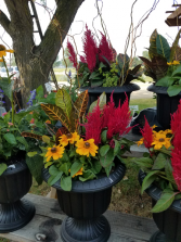 Fall Blooming Planter Blooming Outdoor Plants