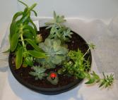 OUTDOOR SUCCULENT PLANTER Outdoor plant