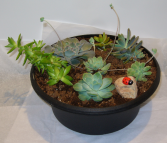 OUTDOOR SUCCULENT PLANTER Plant