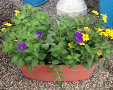 Outdoor surprise  Outdoor planter
