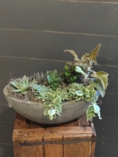 Oval Succulent Garden Succulent