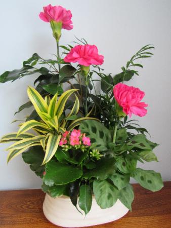 Oval Tropical Planter Planter