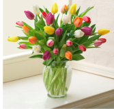 OVER THE RAINBOW / TULIPS APRIL  SPECIAL!!