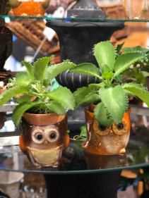 Owl Succulent Planter Plant