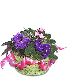 AFRICAN VIOLETS Basket of Plants in Ozone Park, NY | Heavenly Florist