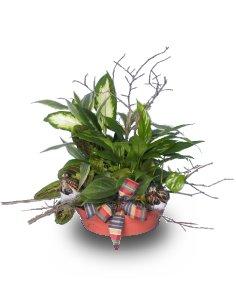 DISH GARDEN of Green Plants