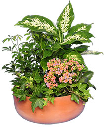 GARDEN PLANTER Green & Blooming Plants