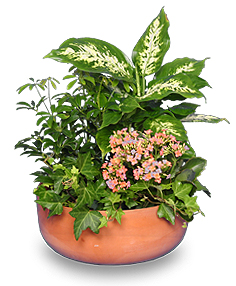 GARDEN PLANTER Green & Blooming Plants in Ozone Park, NY | Heavenly Florist