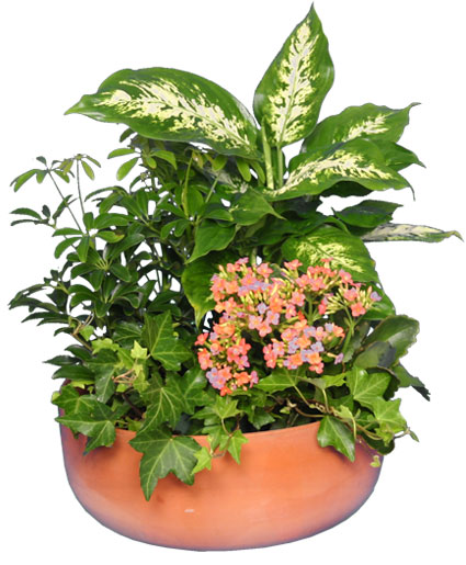 GARDEN PLANTER Green & Blooming Plants | All House Plants ...