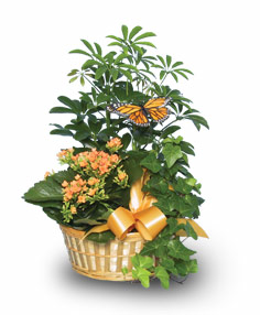 EUROPEAN GARDEN Assorted Plant Basket in Richland, WA | ARLENE'S FLOWERS AND GIFTS