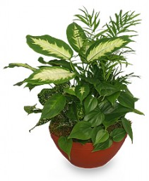 Lush Garden of Green Plants