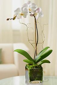 p20 Plants