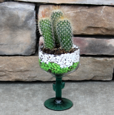 Paco the Prickly Cactus Green Plants