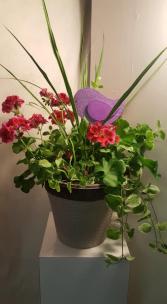 PADIO POT OUTDOOR PLANTS