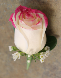 Painted Tip Rose Boutonierre; Choose Spray Color