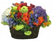 Painters Palette Cut Flowers