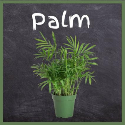 Palm-6