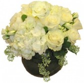 Palm Beach Chic Cut Flowers