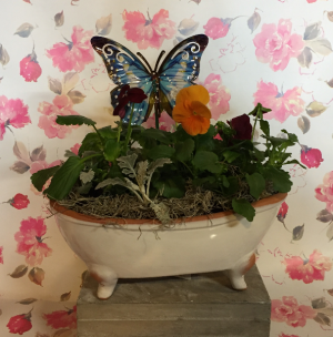 Pansy Tub   in Fowlerville, MI | ALETA'S FLOWER SHOP
