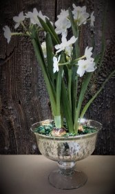 Paperwhites in Mercury Compote Bowl Local Delivery