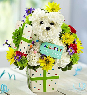Party Pooch™ Arrangement in Croton On Hudson, NY | Cooke's Little Shoppe Of Flowers