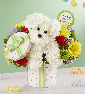 Party Pooch™ Birthday Doggie