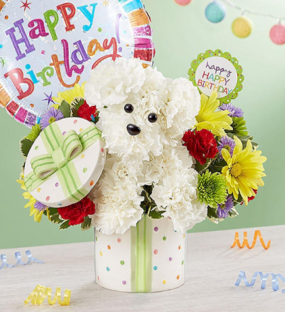 Party Pooch with Balloon From Roma Florist