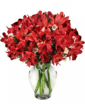 Passionate Peruvian Lily Bouquet in Lexington, NC | RAE'S NORTH POINT FLORIST INC.