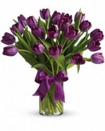 Passionate Purple Tulips ---