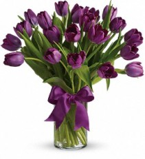 Passionate Purple Tulips Purple