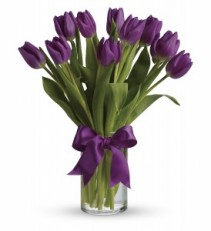 Passionate Purple Tulips  Birthday, Mother's Day, Spring
