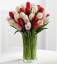 Passionate Tulips